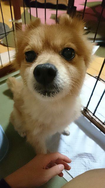 愛犬の画像(プリ画像)