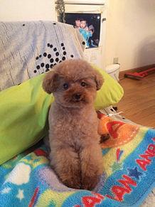 俺の犬ーの画像(プリ画像)