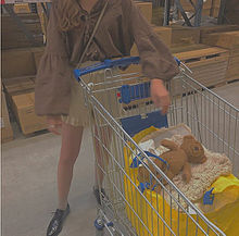IKEA イケア Costco コストコ 顔隠し ブレブラウンの画像(イケアに関連した画像)