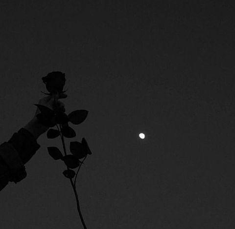 夜 バラ 薔薇 月 病みかわ 暗い 闇 夜空の画像 プリ画像