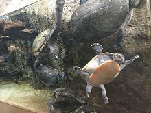 zoo.の画像(ZOOに関連した画像)