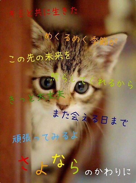 胡蝶蘭垂れ桜さんリクの画像(プリ画像)