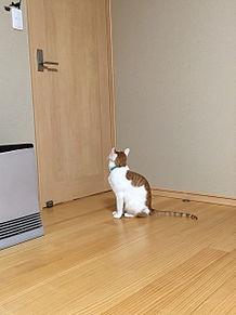 ❀✿ 猫 ❀✿の画像(プリ画像)