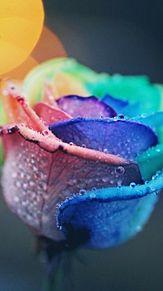 レインボーローズ 神秘的 幻想的 虹色の画像(レインボーローズに関連した画像)
