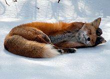 可愛らしい動物。の画像(可愛らしいに関連した画像)