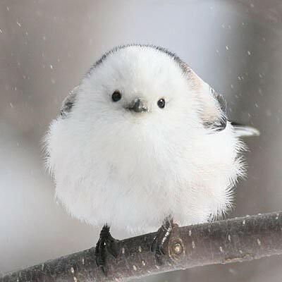 可愛らしい 鳥の画像 プリ画像