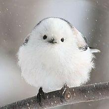 可愛らしい 鳥 プリ画像