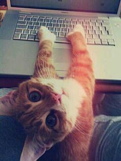 猫 癒されるの画像 プリ画像