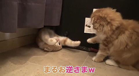 ヒカキンさん まるお&もふこ🐱🐱の画像(プリ画像)