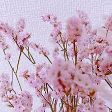 お花✽の画像(さきに関連した画像)
