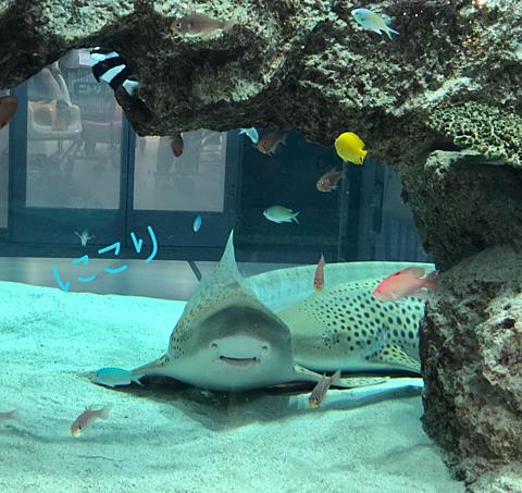 お魚さんの画像(プリ画像)