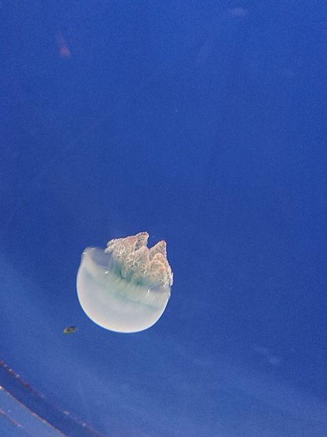 仙台 海の杜水族館の画像(プリ画像)