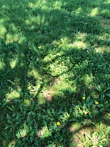 草むら🌷 プリ画像