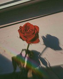 .の画像(薔薇/バラに関連した画像)