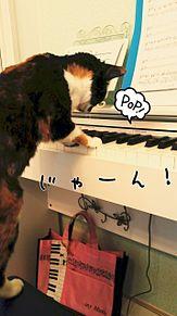 猫がピアノ弾いてますwの画像(プリ画像)