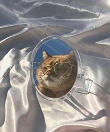 🐱の画像(猫 おしゃれに関連した画像)
