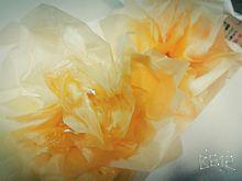 薔薇に見えますか?の画像(あぶらとり紙に関連した画像)