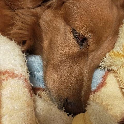 うちの犬よ~の画像(プリ画像)