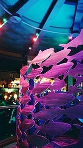 ニモ・アンド・フレンズ・シーライダーの画像(ニモに関連した画像)