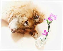 犬・お花 プリ画像