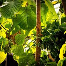 観葉植物 南国 おしゃれの画像(観葉植物に関連した画像)