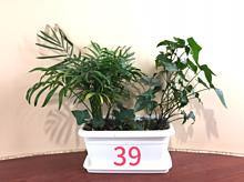 39サンキュー 観葉植物 おしゃれの画像(観葉植物に関連した画像)