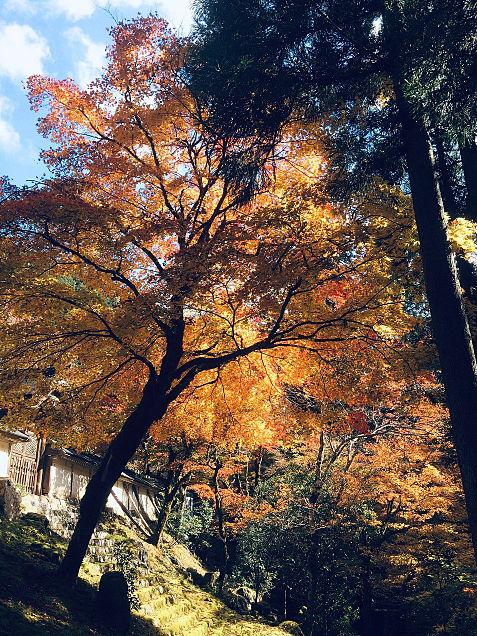 紅葉の永観堂 京都の画像 プリ画像