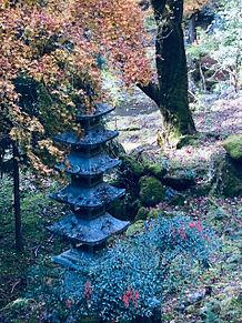 紅葉の永観堂 京都の画像(京都に関連した画像)