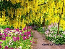 カナダ バンクーバーの美しい花の画像(カナダに関連した画像)