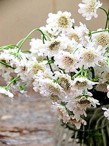 カスミソウ、白い花アレンジ 家庭画報  いいねを押してね!の画像(カスミに関連した画像)