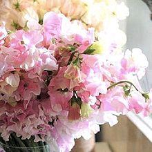 春色の花々 家庭画報より 写真右下のハートを押してねの画像(家庭画報に関連した画像)