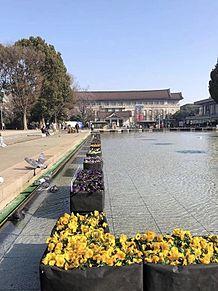 上野公園のパンジー 写真右下のハートを押してねの画像(上野に関連した画像)