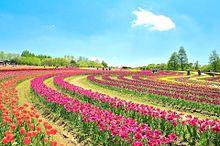 美しいお花畑 写真右下のハートを押してねの画像(花畑に関連した画像)