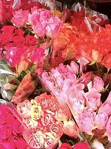 花屋さんのバラ 薔薇 写真右下のハートを押してねの画像(花屋に関連した画像)