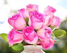 美しいピンク色のバラ 薔薇  写真右下のハートを押してねの画像(美しいに関連した画像)