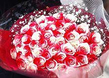 バイカラーローズの花束  写真右下のハートを押してねの画像(バイカラーに関連した画像)
