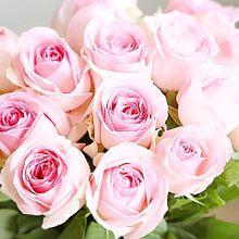 ピンク色のバラ  写真右下のハートを押してね プリ画像