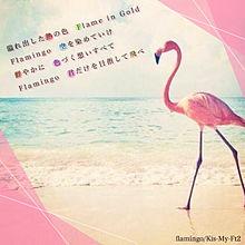 flamingoの画像(プリ画像)