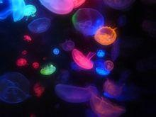 jellyfish*imageの画像(プリ画像)