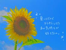 夏だぁーーー!*°の画像(プリ画像)