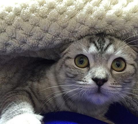 毛布の下からの画像(プリ画像)