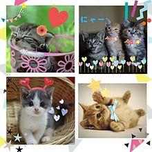 子猫ちゃんの画像(プリ画像)