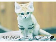 スナネコ。の画像(ネコに関連した画像)
