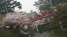 桜と赤い橋の画像(赤い橋に関連した画像)