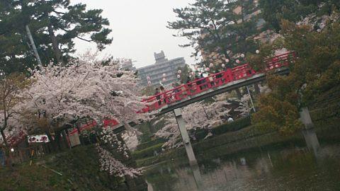 桜と赤い橋の画像 プリ画像