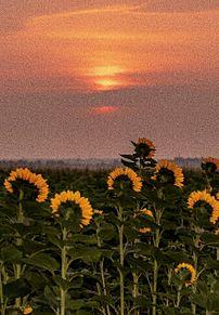 雰囲気の画像(向日葵に関連した画像)