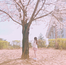 Spring  14の画像(Springに関連した画像)