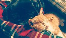 おやすみ♡ プリ画像