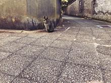 島猫の画像(猫に関連した画像)