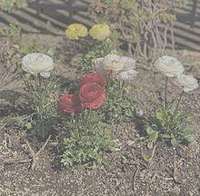 量産の画像(flowerに関連した画像)